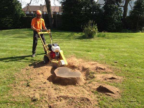 Image result for Stump Grinding
