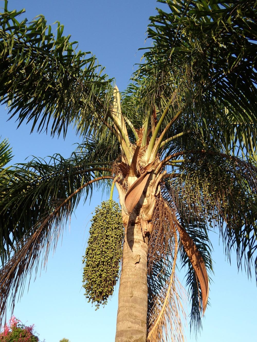 palm-684401_1920