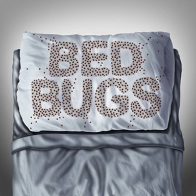 Bed bugs in durham nc