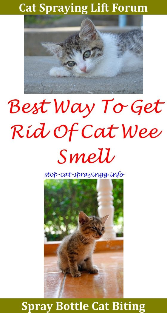 how to stop cats from spraying outside your home