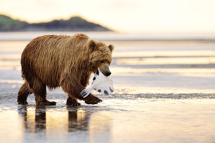Động vật hoang dã ở Alaska