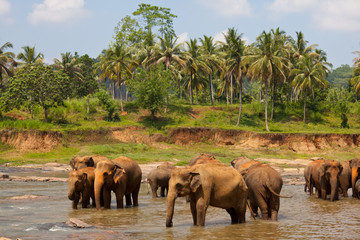 Srilanka images 2